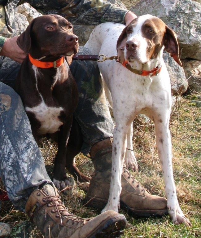 Larry Case's WV turkey dogs Kota & Patches