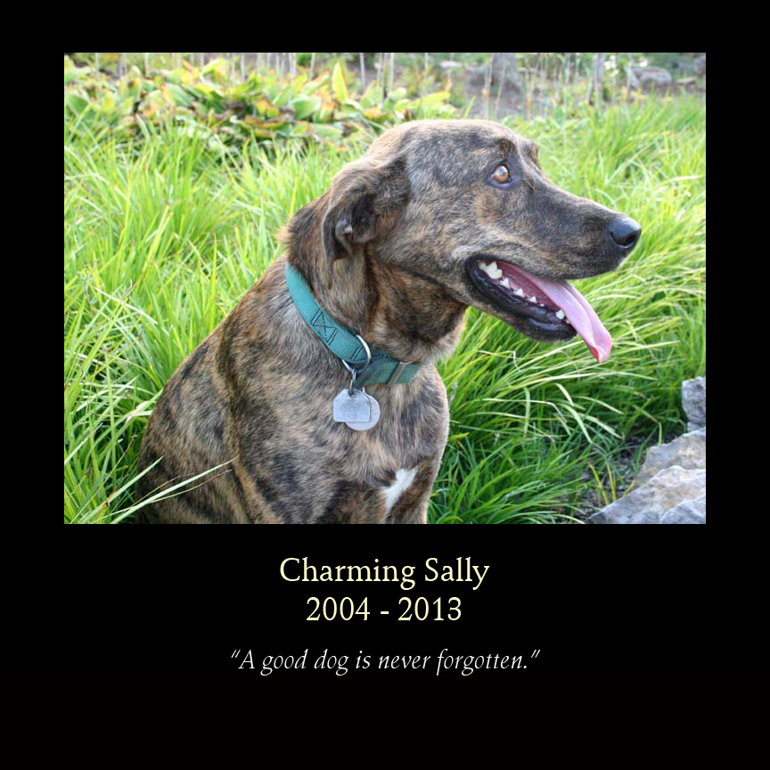 Charming Saly - Mountain Cur of David Wright