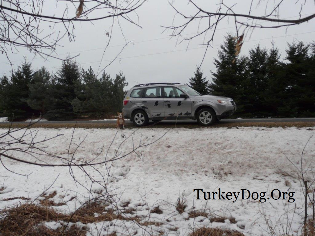Wisconsin hunter finds people are good - protect hunting dog from traffic