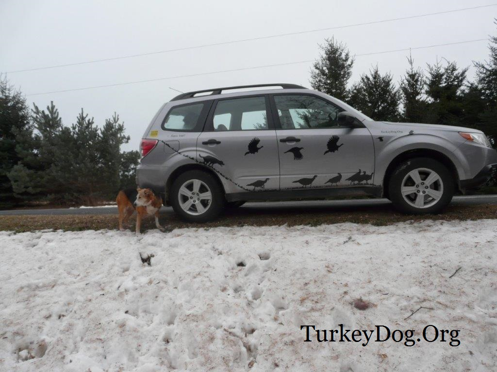 Local people find hunting dog paying in road and protect it from traffic.