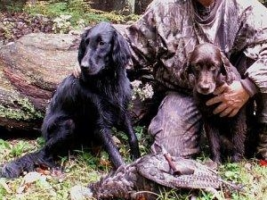 Charles Hartman NY Flat Coated Retriever turkey dogs Marley and Kip