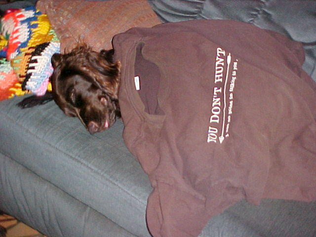 sleeping dog on couch covered with tee shirt
