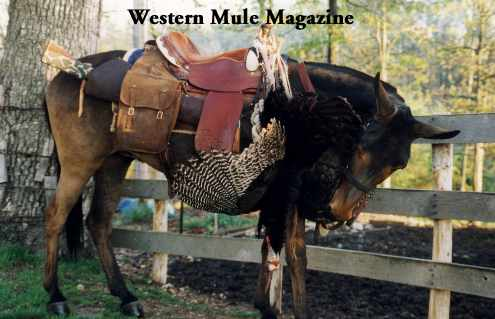 Hunt turkey