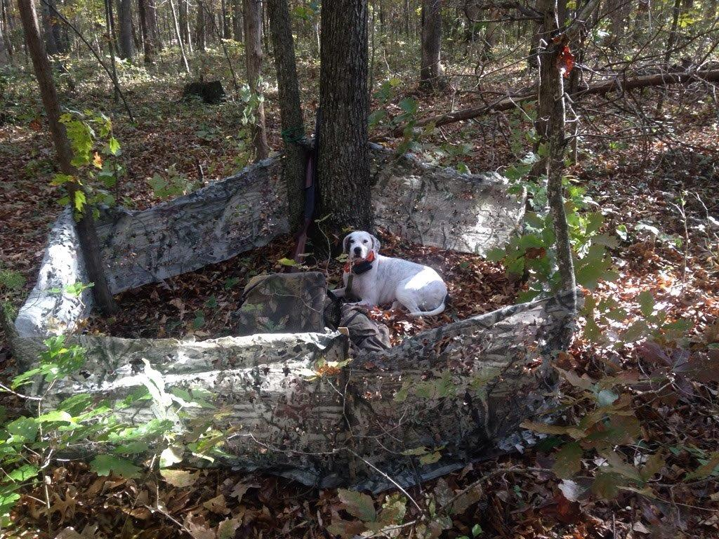 Blind for fall turkey hunting with a dog in Virginia
