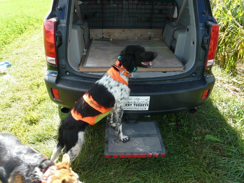 hitch platform for turkey dog to jump in the