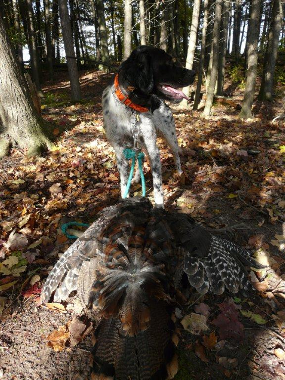 My first turkey with Lucky - she got 20 birds
