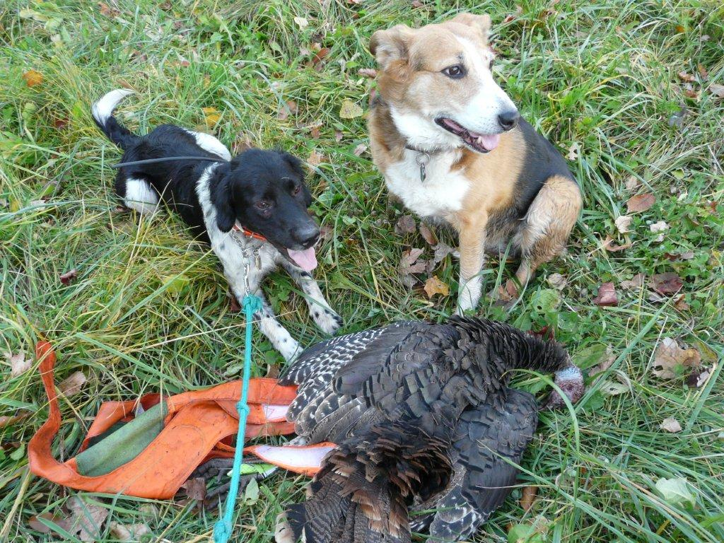 Lucky Lady & Cedar Creek Keena with their