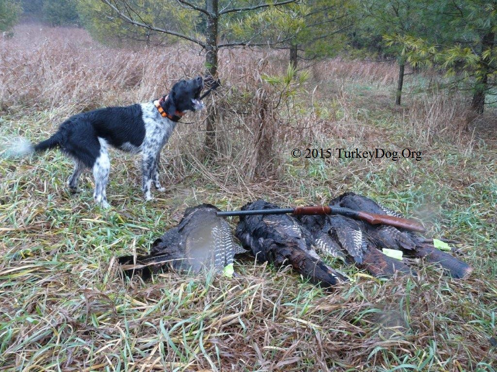 World famous turkey hunting