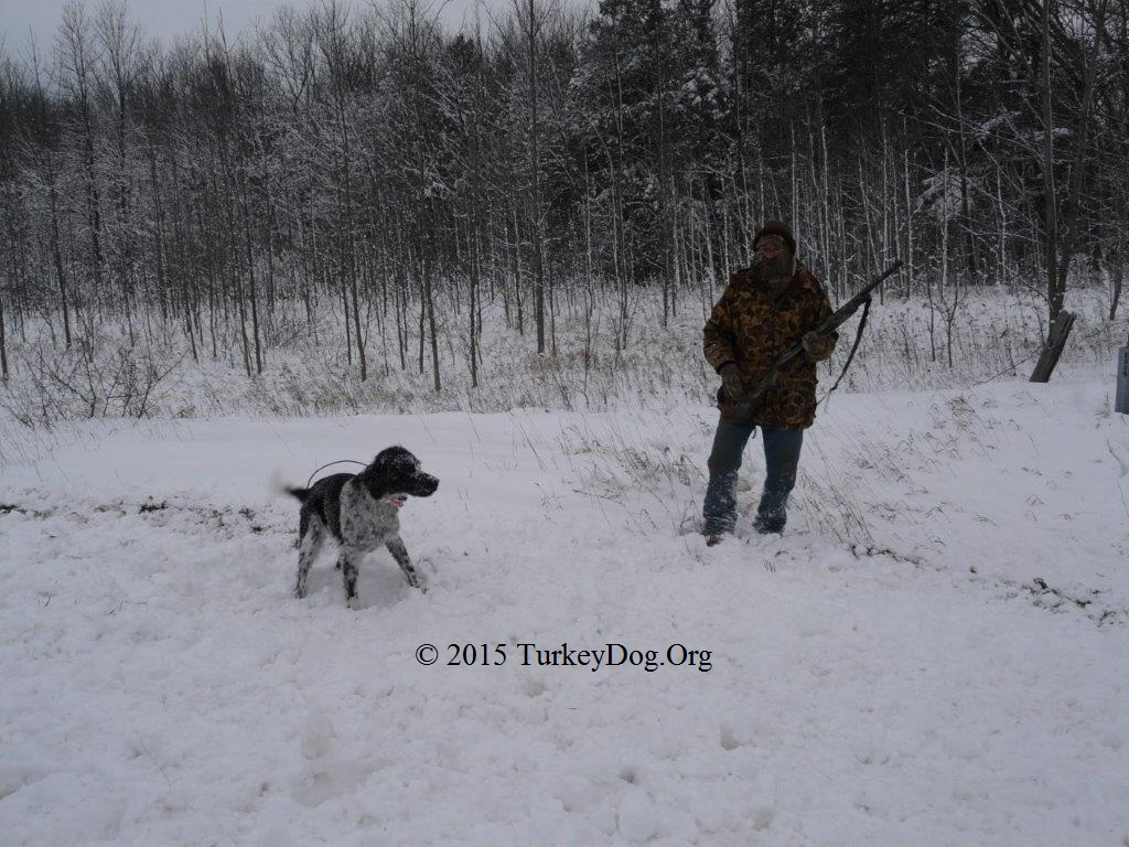 Hunting wild turkeys in WI with a dog over the