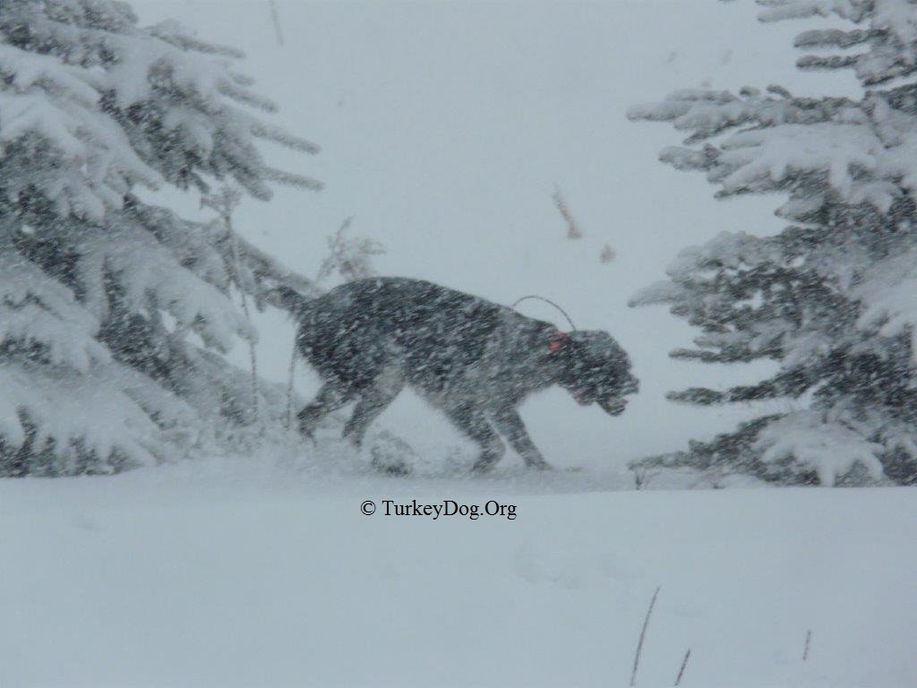 The turkeys can't see this