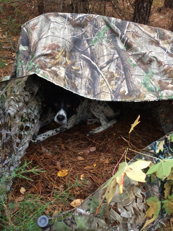 Virginia turkey hunting dog Bailey