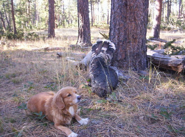ny dog hunts