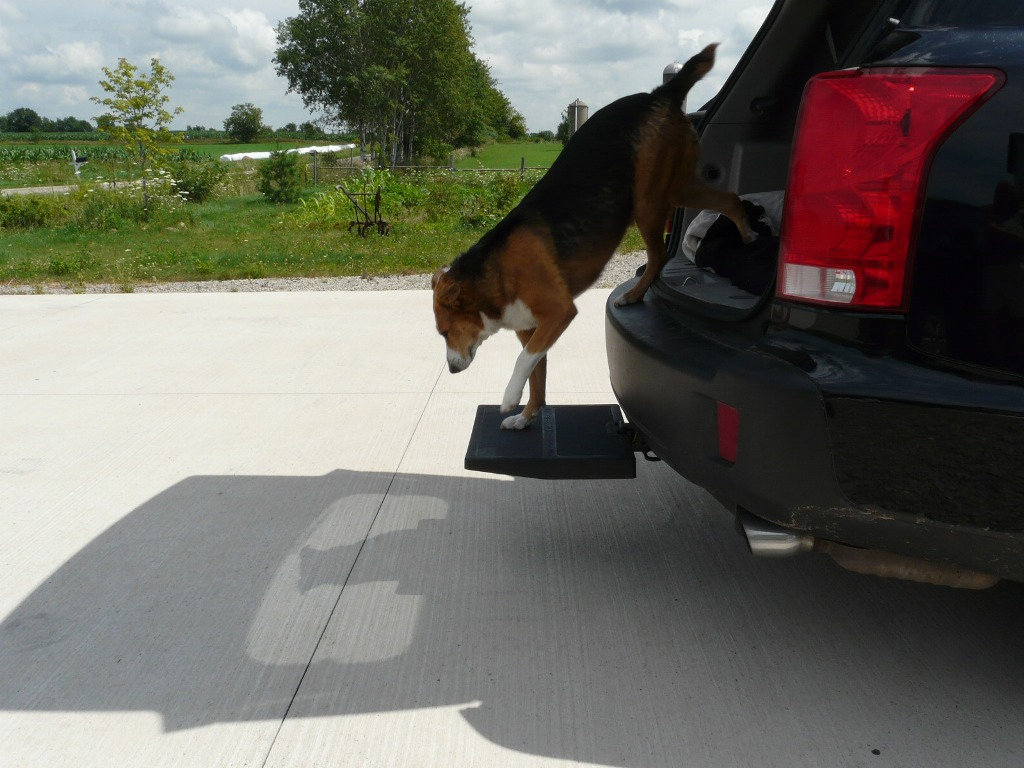 Otto Step helps dogs jump up into the truck or SUV