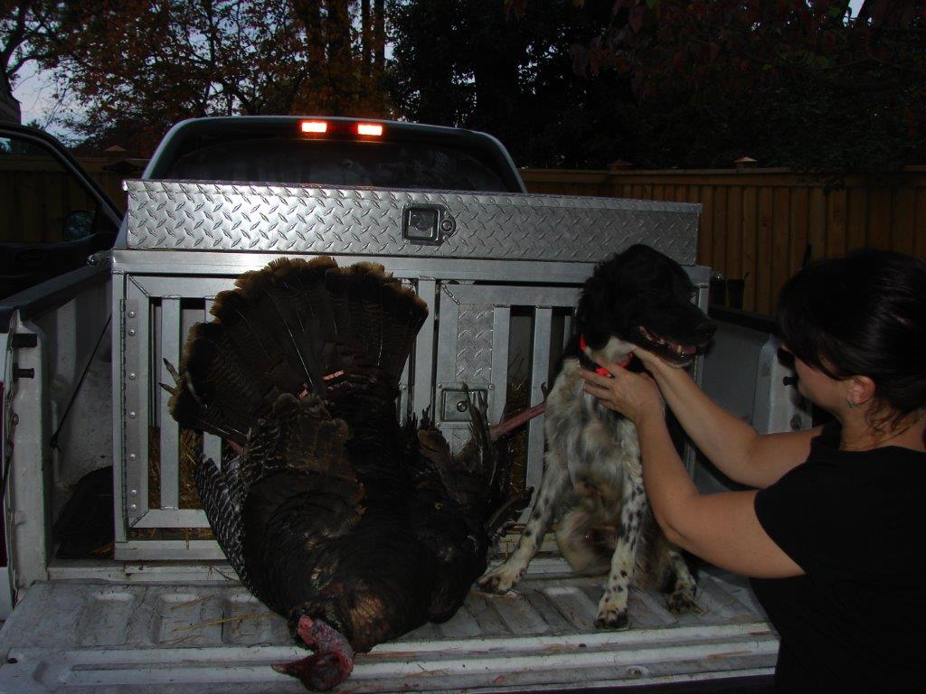 October 2012 wild turkey
