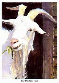 the prodigal goat by tom j whitaker