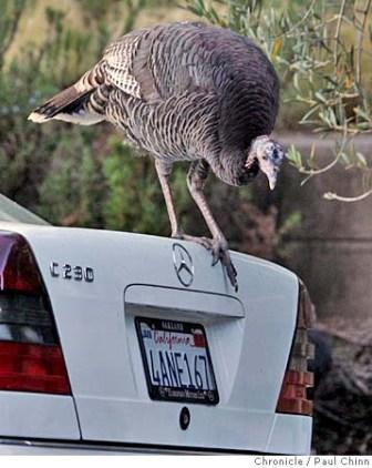 turkey