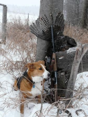 winter turkey hunting with a dog in wisconsin