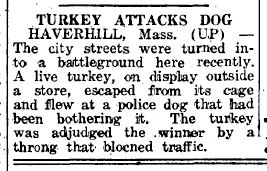 Turkey attacks dog and wins