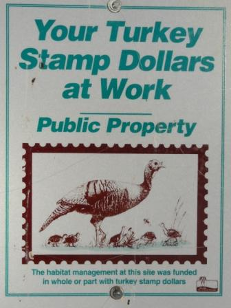 wisconsin wild turkey